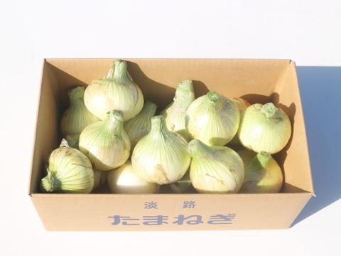 【3月~4月期間限定】シンプルにオニオンスライスがおすすめ! サクッと甘い新玉ねぎ(極早生種)【5kg】