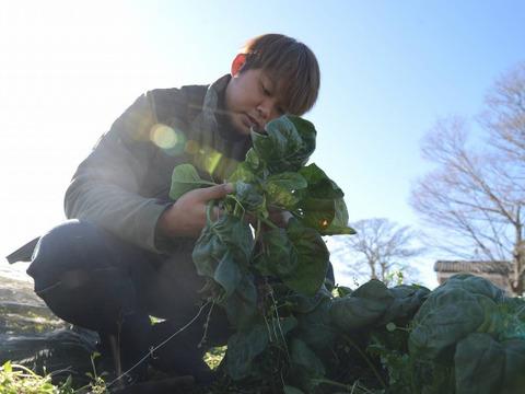 【1月限定】舟田農園のほうれん草ときゅうりのセット