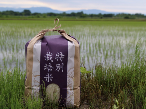 農家直送!!2021年度新米!!北海道産特別栽培ゆめぴりか5kg白米
