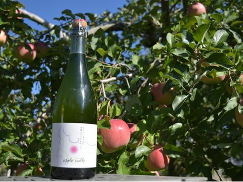 アップルシードル(辛口)✨りんごの発泡酒✨