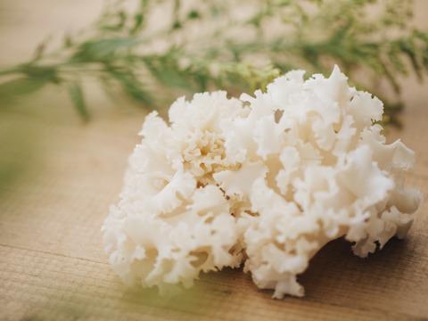 【希少】食卓に真っ白な花が咲く!コリコリおいしい幻のキノコ、ホホホタケ(4パック)