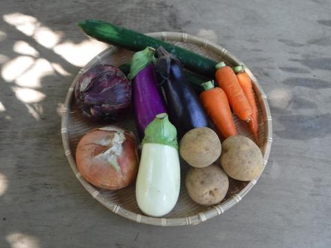 夏のカレー用野菜セット Sサイズ約7品