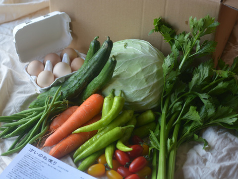 【鮮度抜群!】さいのね畑の野菜セット[小]+たまご(農薬・化学肥料不使用)