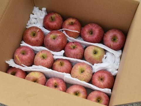 りんご 長野県産 サンふじ 製菓用 15kg 39-60玉
