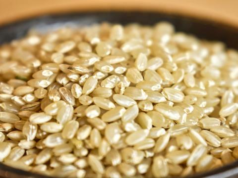 【新米激安祭り】10/31まで40%引き 玄米30kg 令和3年産 大嘗祭 とちぎのほし 収穫でき次第発送