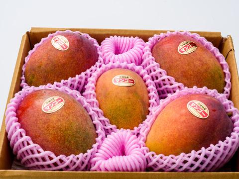 【順次発送中】ご自宅用 アップルマンゴー【約2kg】