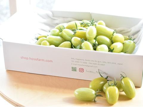 食卓を彩るトマト。緑なのに食べれるの!?グリーンスピカ(1kg)