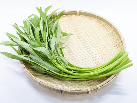 【肥料&農薬不使用栽培】固定種の空芯菜 500グラム