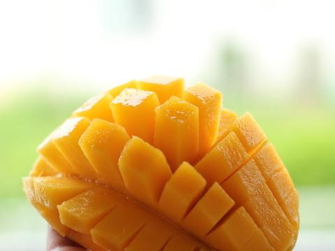 【先行予約】沖縄産完熟マンゴー 2kg (贈答用)特撰 果汁がジュワッとあふれ出す、甘みたっぷり。