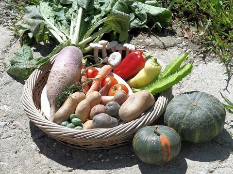熨斗つき! ベテラン農家のお野菜ギフト