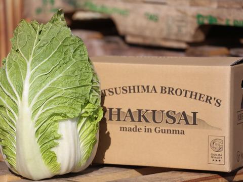 【絶品!!】高糖度!白菜のイメージ変わります!松島兄弟の寒締め白菜♪(2玉入り7.6〜9kg)※1玉用ダンボール×2箱