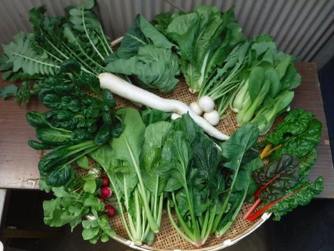 野菜ボックス Mサイズ(約8~10品)