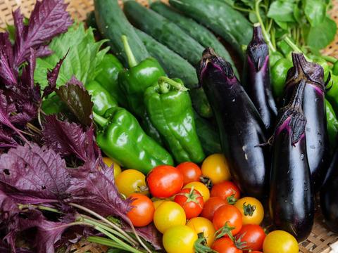【お試し】鴨さんの旬を届ける野菜セット8種類程度