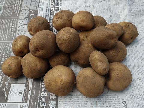 新ジャガイモ 新鮮 美味しい 無農薬 キタアカリ 2kg お徳用