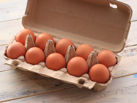 【生食専用】10個 朝採れ平飼い卵を食卓へ! 濃厚な黄身とプリッとした白身が美味しい純国産鶏新鮮たまご(10個 10玉入×1パック)
