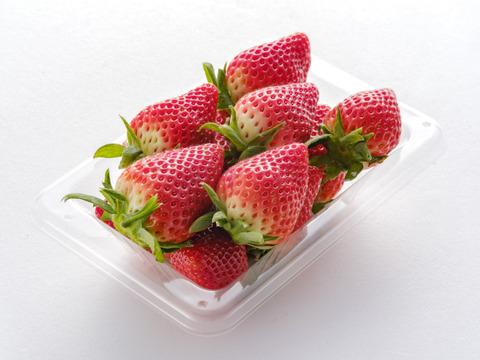 【収穫期間あとのこり1週間ですお世話になりました】 ずっしり 佐賀県産新品種いちごさん 4パック入り 内容量1㌔以上
