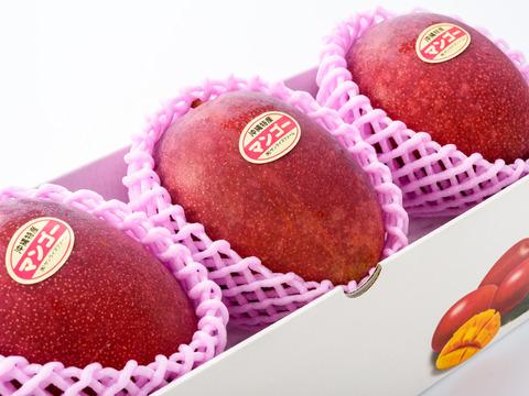 【順次発送中】サンライズファームのアップルマンゴー 【秀品】【1kg】