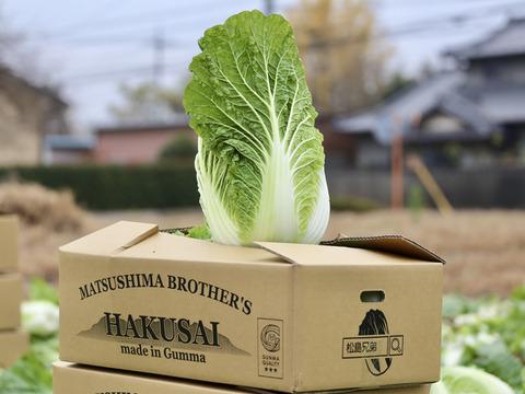 【絶品!!】高糖度!白菜のイメージ変わります!松島兄弟の寒締め白菜♪(1箱4玉入り14〜15㎏)