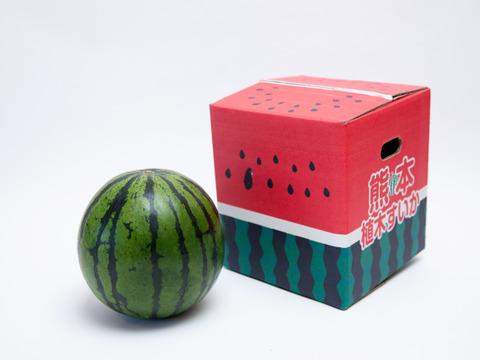 【6月中発送】熊本植木 大玉スイカ 羅皇