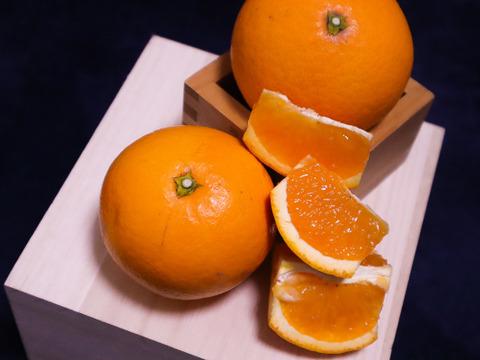 【4kg】じゅわっとジューシー!まさに食べるジュースな和製オレンジ【清見】