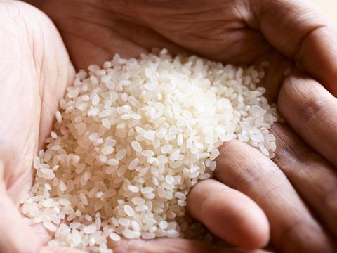 """一粒一粒のつぶがいきる、山形の新品種""""雪若丸""""(特別栽培米)5kg(米おこし付き)"""
