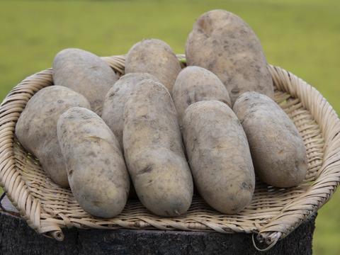 自然栽培 ジャガイモ 1.8kg(メークイン・北海黄金) ※簡易包装でのお届け