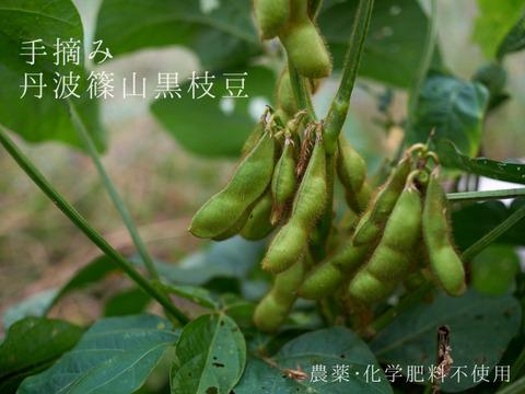 【農薬・化学肥料不使用】手摘み 丹波篠山黒枝豆(さや豆)1kg