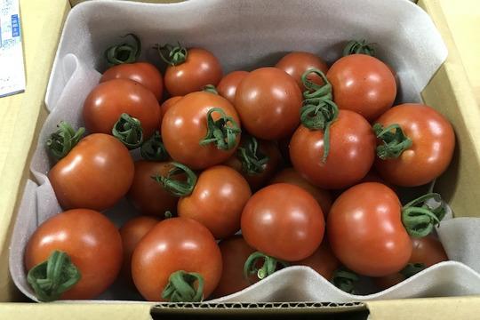 有機トマト【シンディースイート】1kg