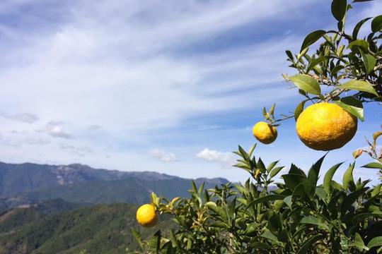 【高知県産】星空の柚子 10個