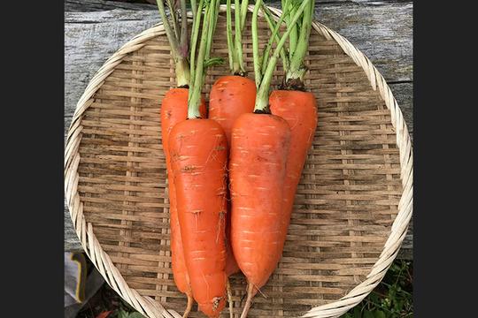青森県八戸市南郷より 自然農法で育った訳ありにんじん 5kg