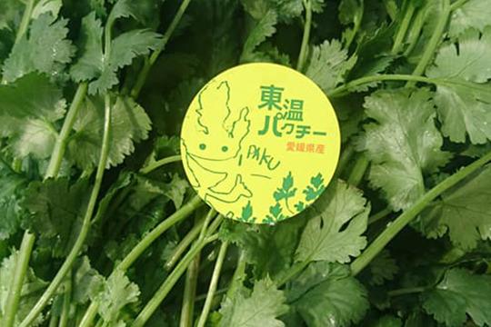 愛媛県産東温パクチー 500g