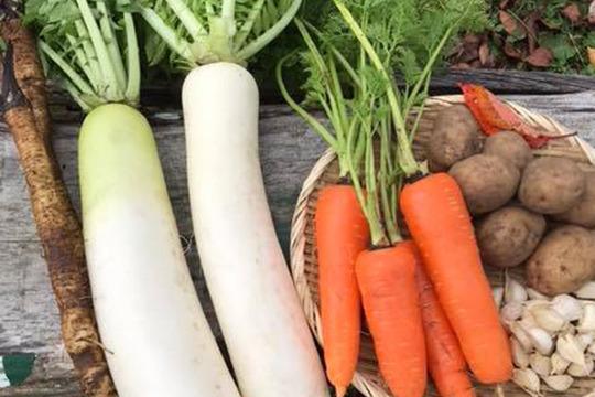 青森県八戸市南郷より 自然農法で育った 根菜セット