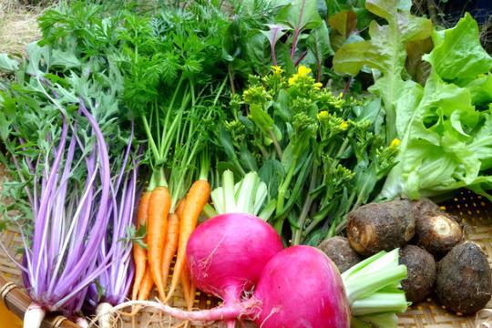 〜自然の恵みたっぷり〜じっくり育てた九州野菜セット8品