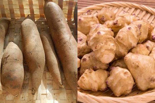 カラダに優しい根菜(ヤーコン&菊芋)セット(1kg)