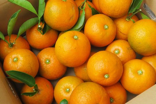 【光電子水利用】無農薬パワー橙(だいだい)3kg