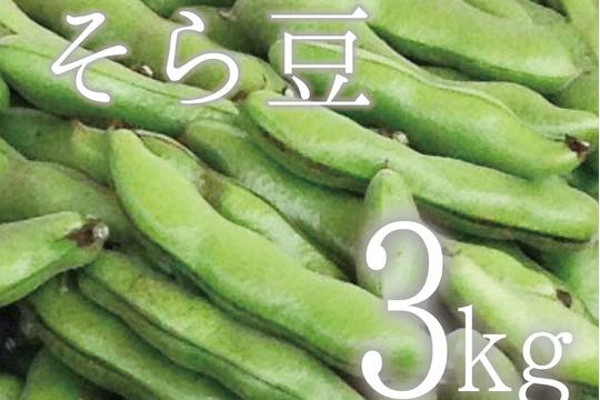 【(予約)5月限定!待ってましたこの季節♪】そら豆(さや付) 3kg