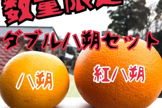 【数量限定!】樹上甘熟!ダブル八朔セット(黄&紅)約8kg入り
