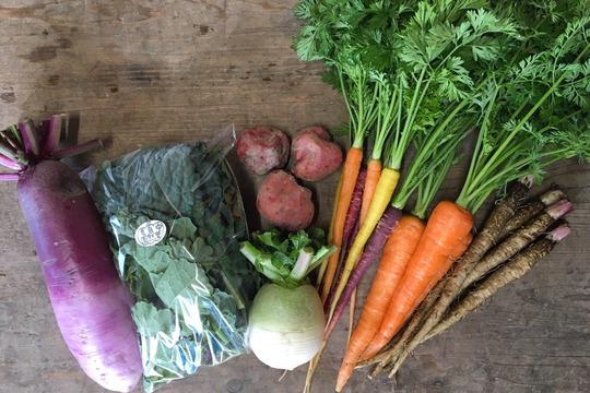 【高知県・中里自然農園】お試しお野菜BOX(約6品目)/無農薬