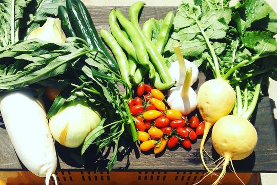 菜園家族のわくわく医農野菜セット80♪