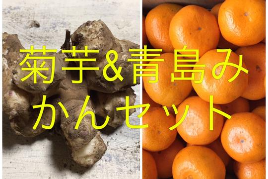 完全無農薬健康セット!菊芋200グラムと青島みかん2キロセット!