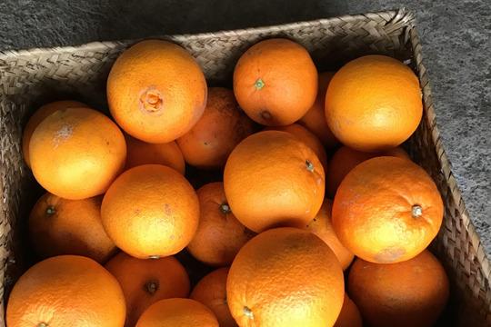 今年さいごです。完全無農薬 ネーブルオレンジ 4キロ