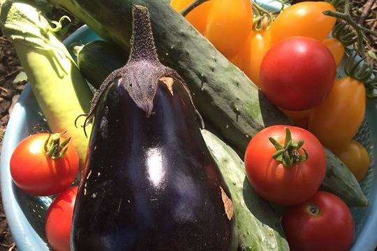 【兵庫県・遊楽里農園】無農薬*野菜セットL(8〜10種類)