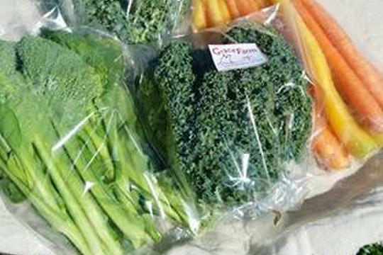 ケールとニンジン、小松菜の野菜ジュースづくりセット