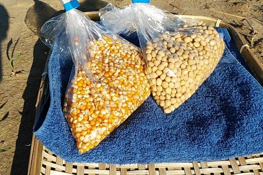 【2018年新物】農薬・肥料不使用*大豆500gとポップコーン500gセット