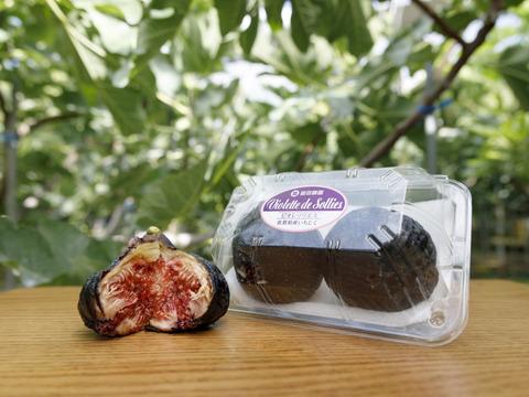 【今だけ500円OFF】ビオレソリエス(黒イチジク)おしゃれに皮ごと平均糖度25度を目指し生産した商品300グラムパック×2パック画像は今年度産夏果を使用しております