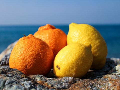 [2kg]完熟・わけあり不知火[しらぬい]+低農薬レモン(大小混合)