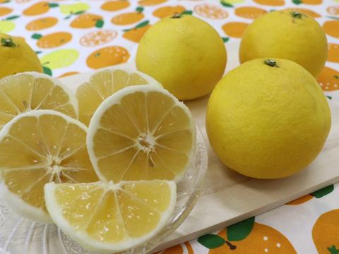 ニューサマーオレンジ(日向夏)ご家庭用5㎏