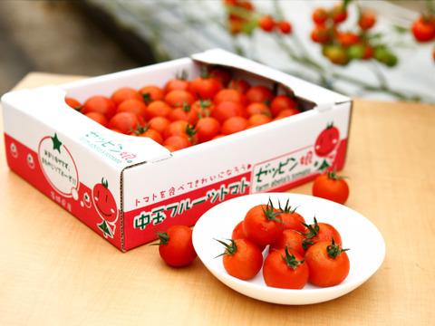 皮が薄くジューシーな中玉フルーツトマト ゼッピン娘(華おとめ) 1.8kg #農カード付