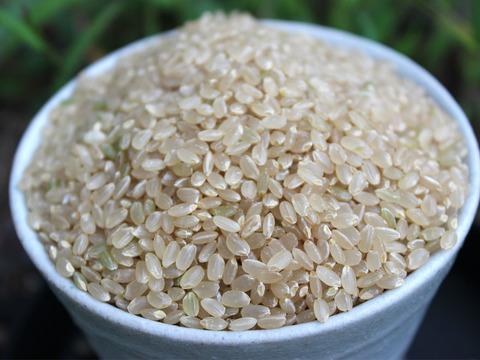 【令和2年産米】ゆめしなの《玄米》(10kg) 長野県の高地限定栽培のおいしいお米