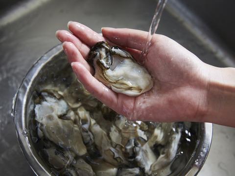 【お届け日指定可能便】生で安心して食べられる 美浄生牡蠣 むき身 500g